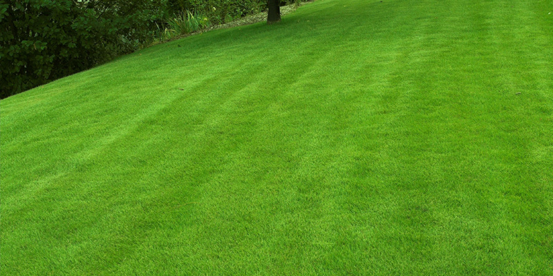 What Makes the Perfect Lawn? Tailor Turf
